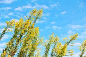 飛散する花粉